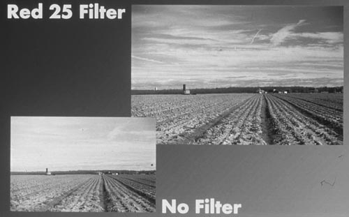 With green 11 and black white film no filter with color film